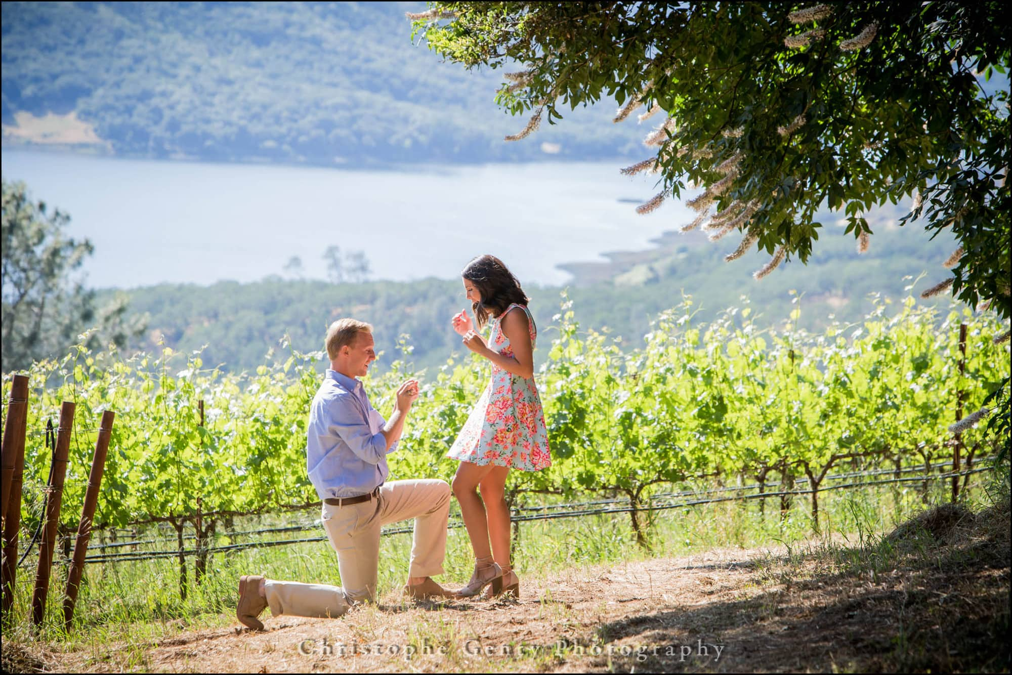 Marriage Proposal Photography At Jacuzzi Family Vineyards In Sonoma Ca